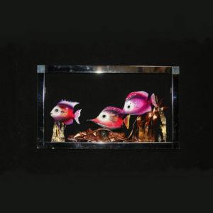 Something Fishy in Frame